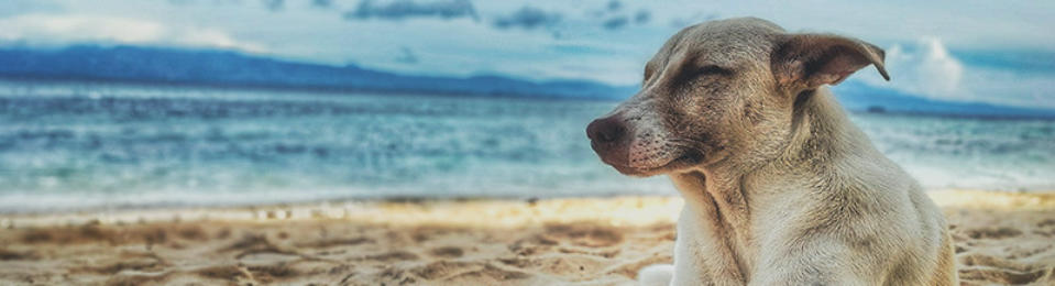 Pet friendly holiday homes in Lake Macquarie